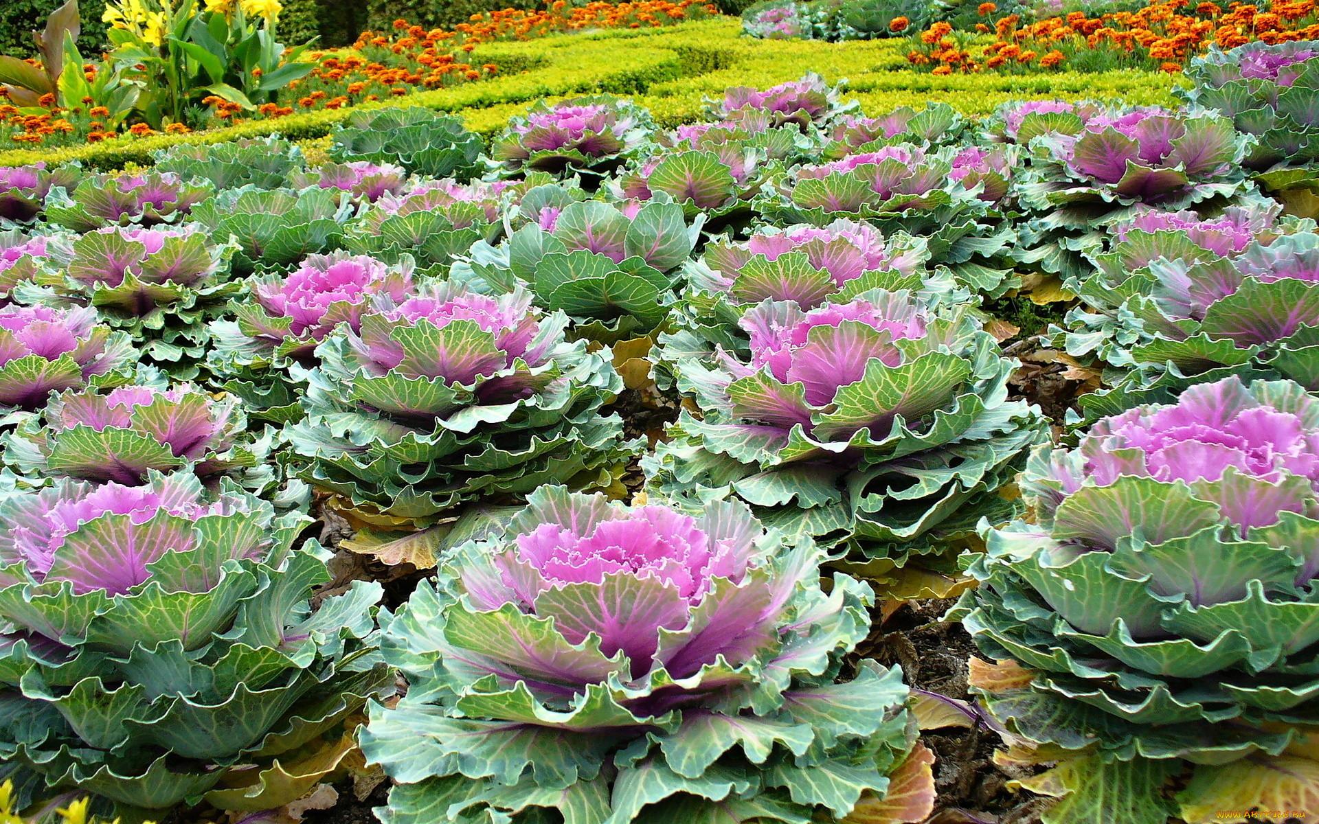 цветы зеленого цвета в саду фото создают основе исторических